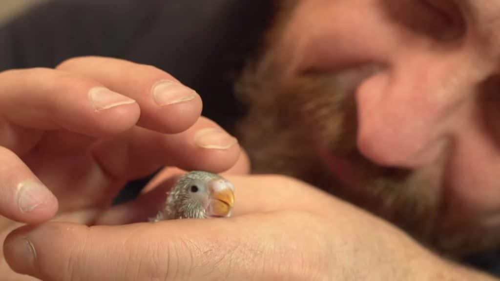 Le perroquet bébé