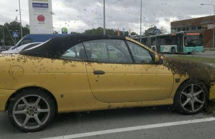 Une voiture couverte d'abeilles