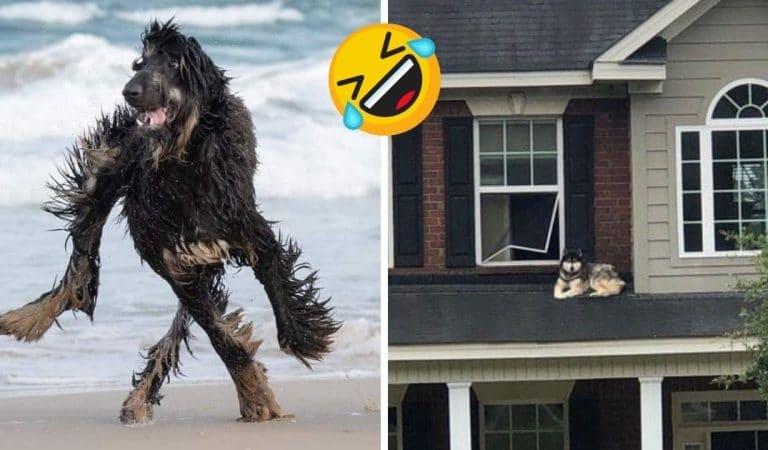 18 chiens aux comportements aussi étranges que drôles !