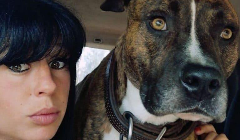 Affaire Elisa Pilarski : que devient Curtis, le chien désigné coupable par les tests ADN ?