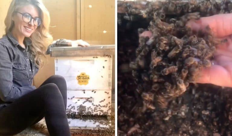 Surnommée la «Reine des abeilles», elle déplace des ruches sans aucune protection