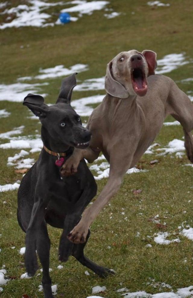 Une photo de chien marrant dans une posture drôle