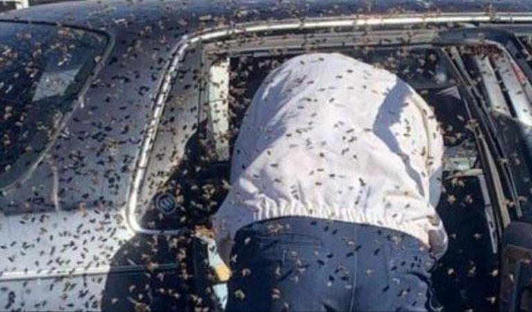 Il part faire du shopping et retrouve 15 000 abeilles dans sa voiture