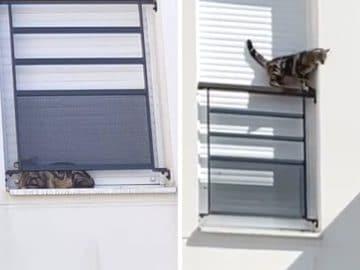 Un chat maltraité et enfermé sur le rebord d'une fenêtre à Orly.