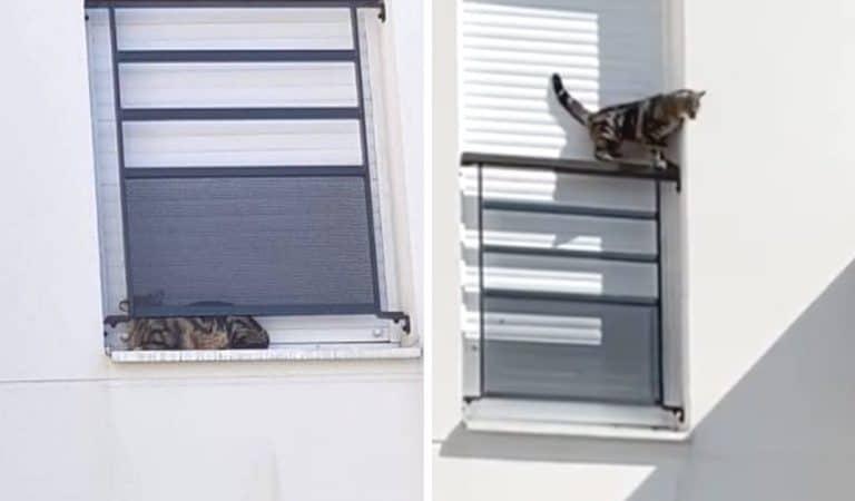 Il punit son chat en l'enfermant deux jours sur son rebord de fenêtre et finit par tomber du 3e étage