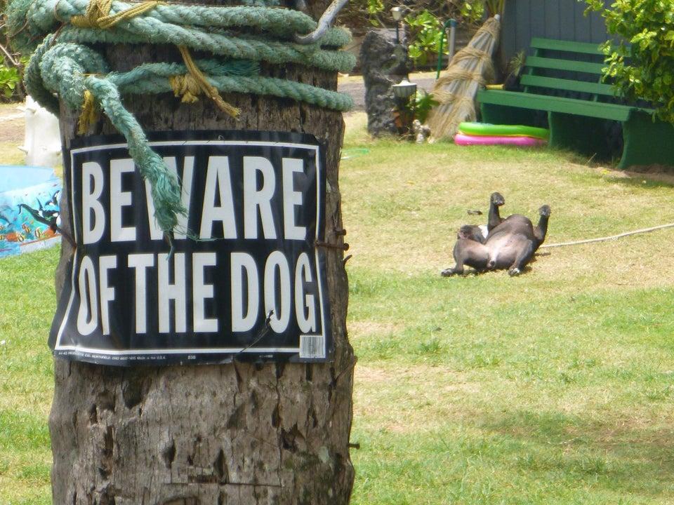 photo de chien de garde marrant