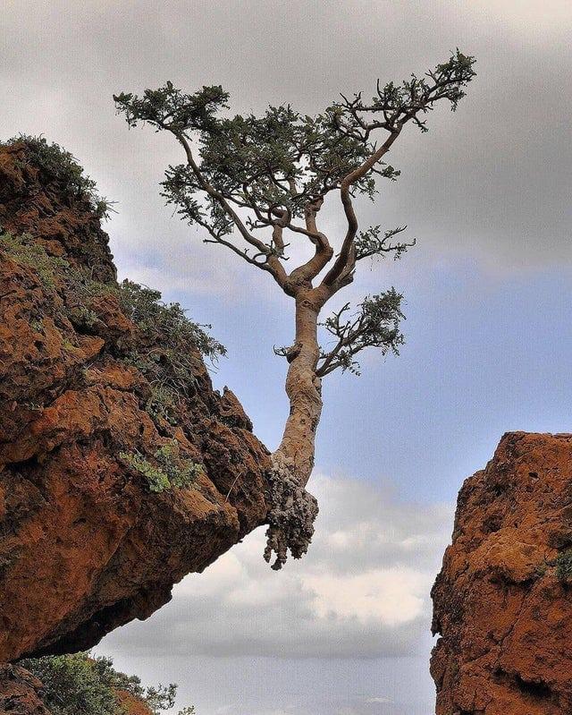 Photo de la nature