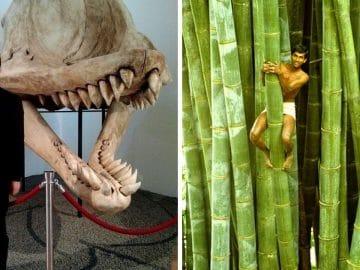 Des photos qui comparent la taille de l'homme.
