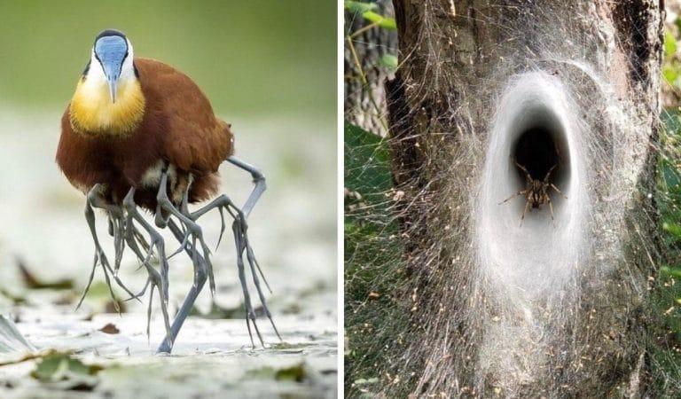 18 photos qui démontrent à quel point la nature est aussi merveilleuse que redoutable
