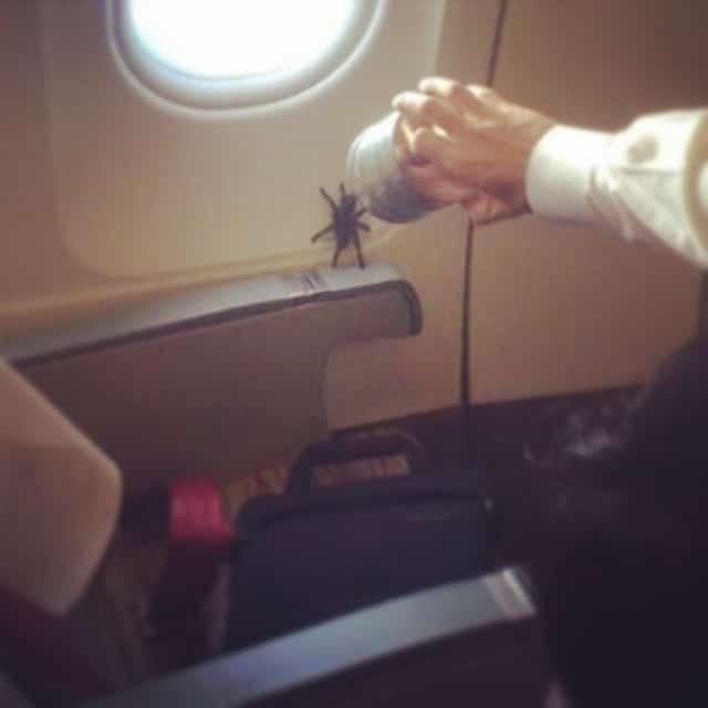 Une araignée dans un avion