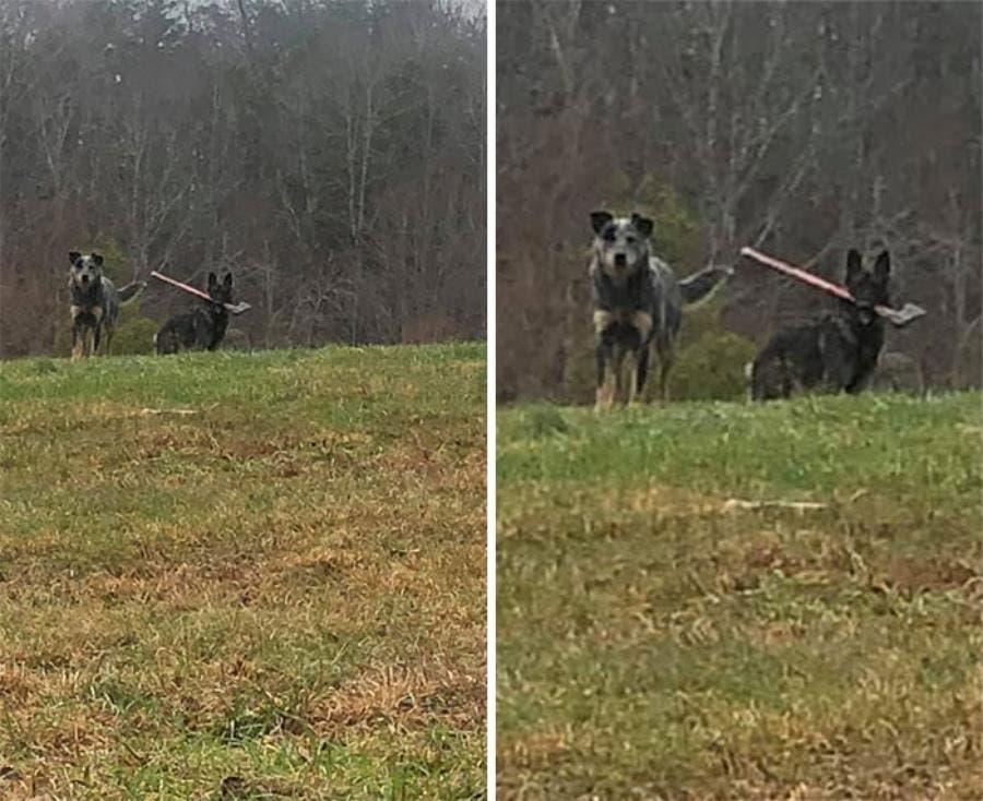 Un chien avec une hache dans sa gueule