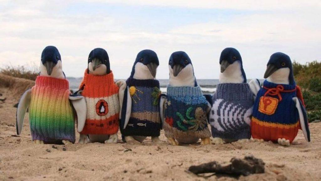 pingouin pull facebook