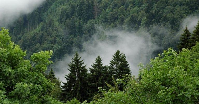 une forêt de l'utah, aux etats-unis.