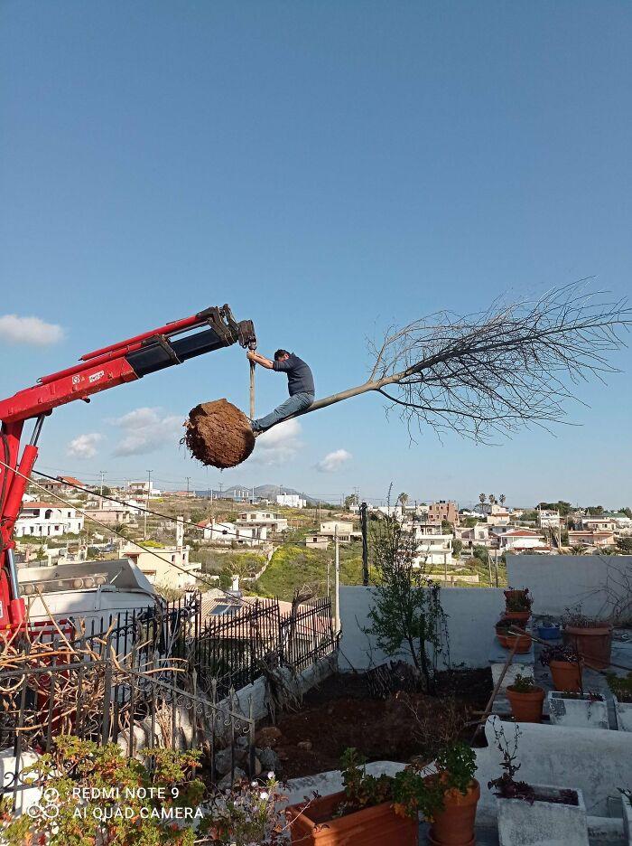 un ouvrier qui se suspend à un arbre