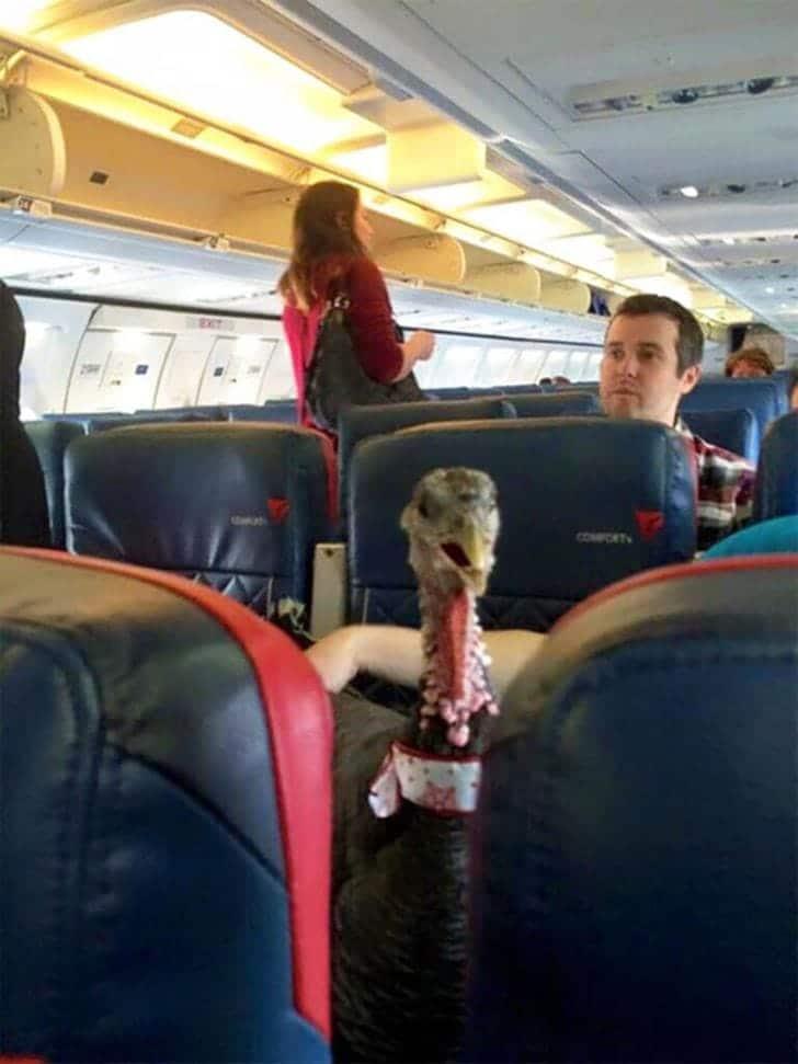 Un oiseau dans un avion