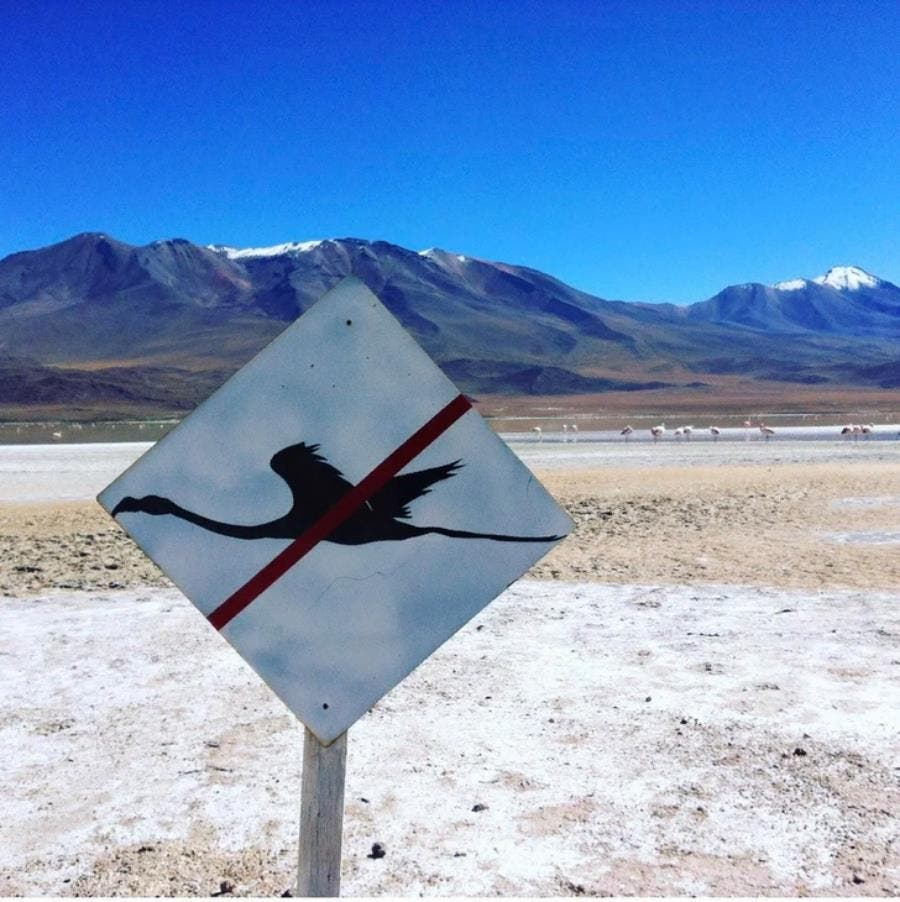 Un panneau prévenant du passage d'oiseaux