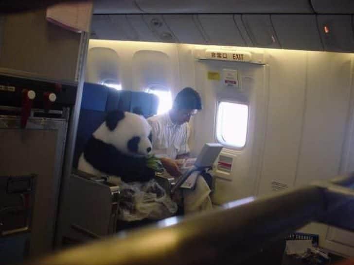 Un panda en avion