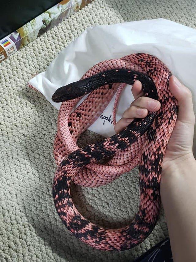 un long serpent rose