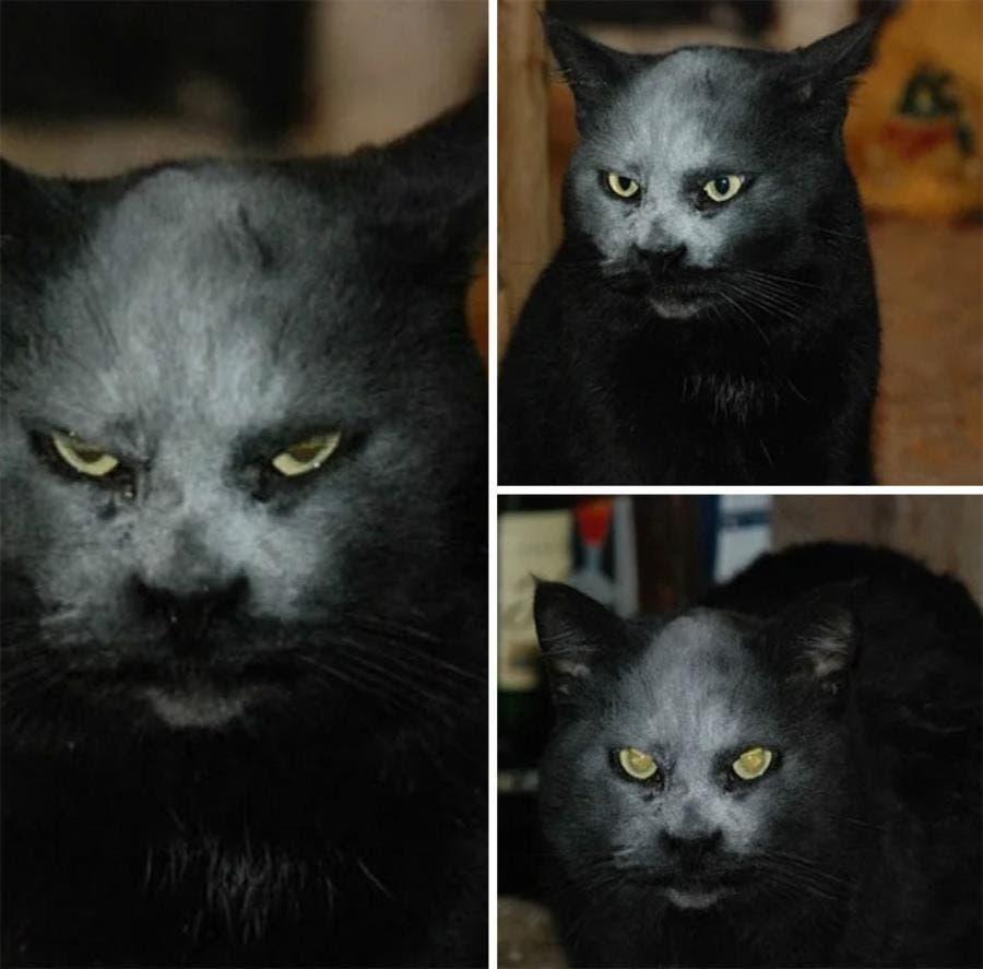 Un chat noir avec de la farine