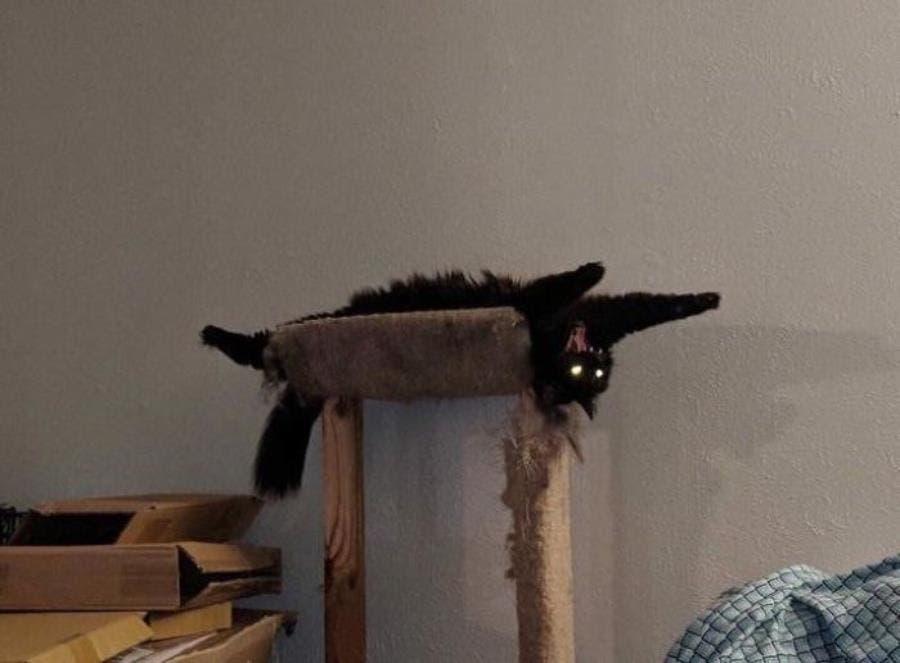Une photo de chat effrayante