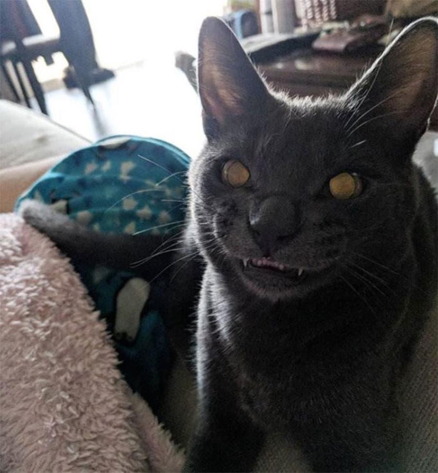 un chat avec un sourire inquiétant