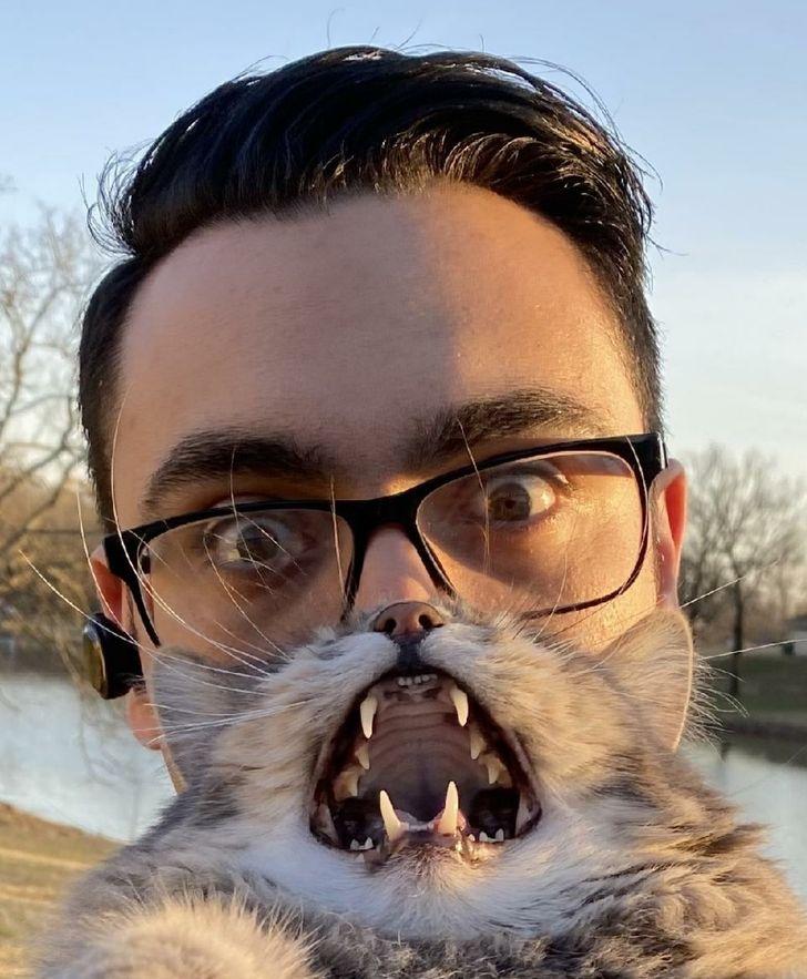 une illusion d'optique avec un chat et un visage d'homme