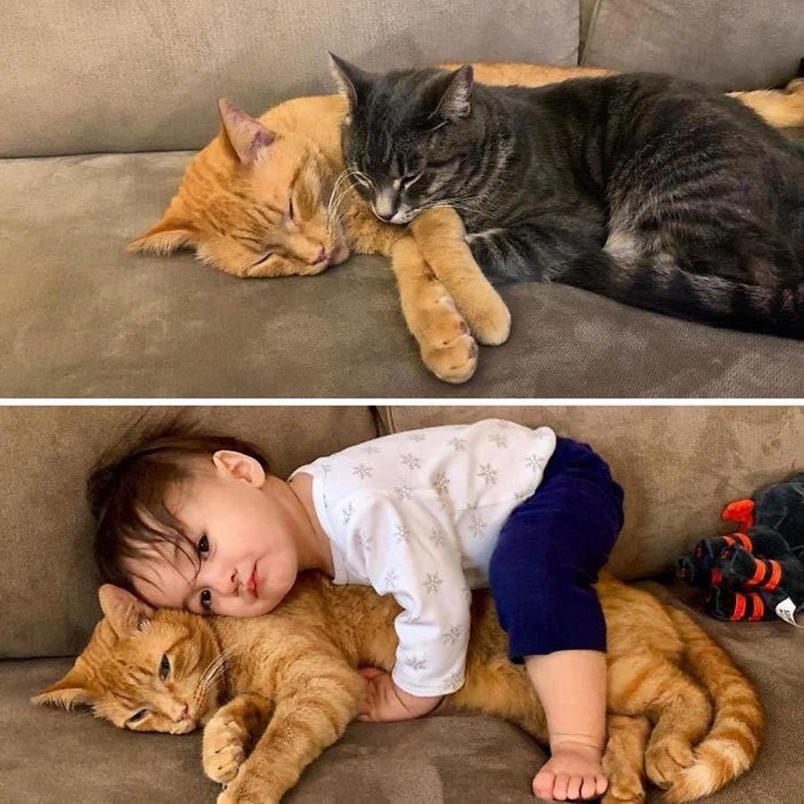 des chats avant et après l'arrivée d'un enfant