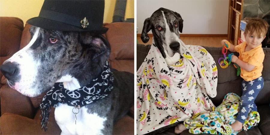 Un chien avant et après l'arrivée du premier enfant dans sa famille