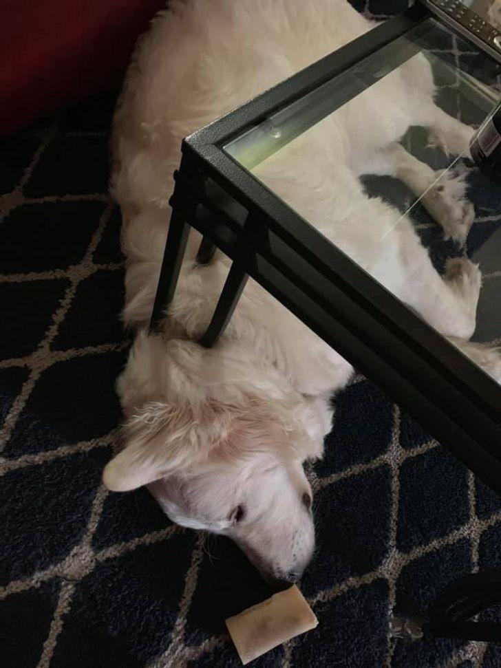 une illusion d'optique avec un chien