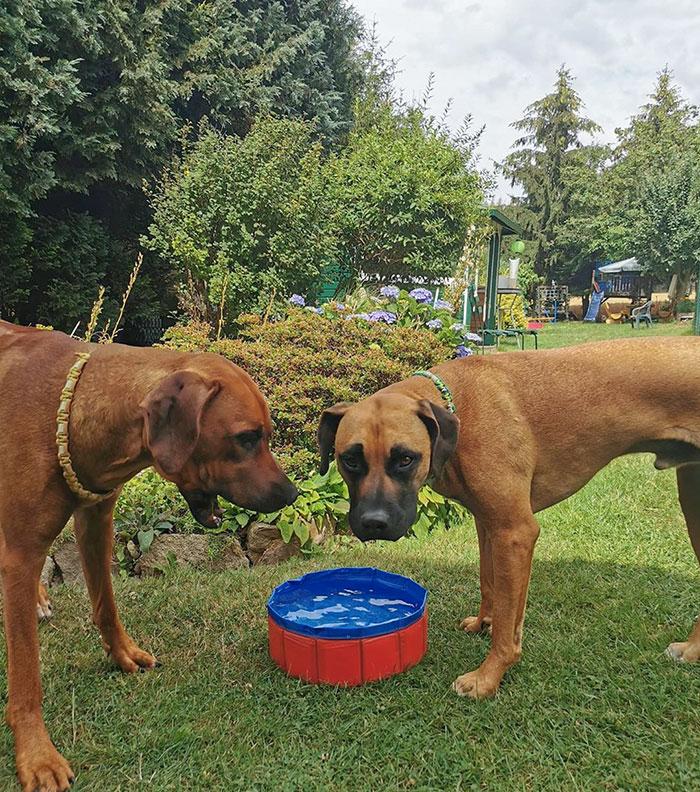 Un achat trompeur sur internet : une piscine pour chiens