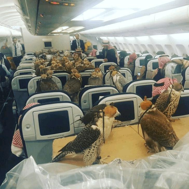 Des rapaces à bord d'un avion de ligne