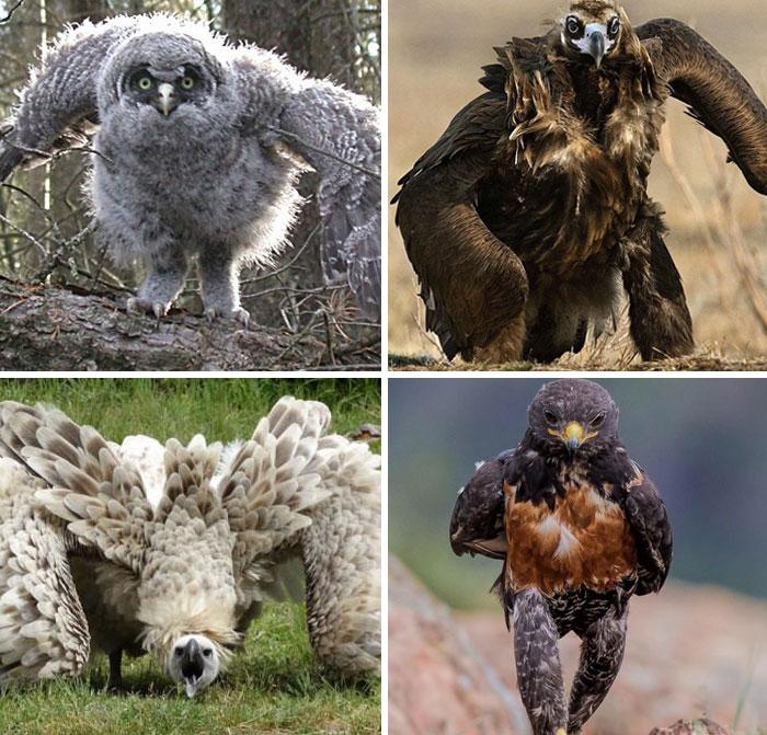 oiseaux qui courent