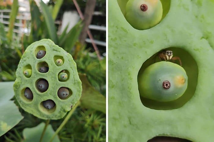 un arachnide dans une plante