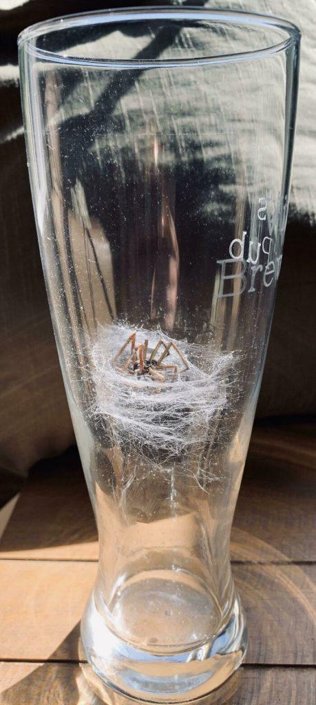 une araignée dans un verre de bière