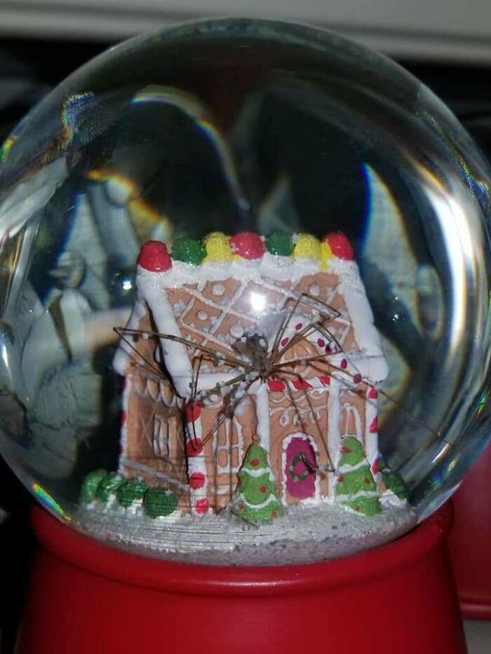une araignée dans une boule à neige