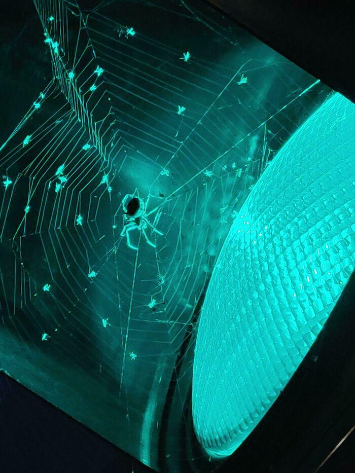un arachnide de nuit