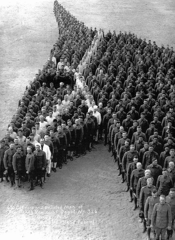 un hommage aux chevaux du conflit
