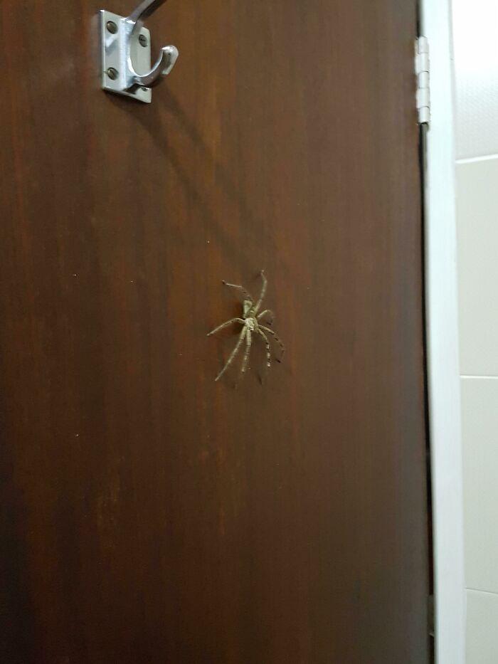 un arachnide dans la salle de bain