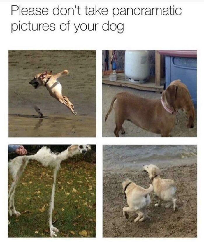 photos panoramiques de chien