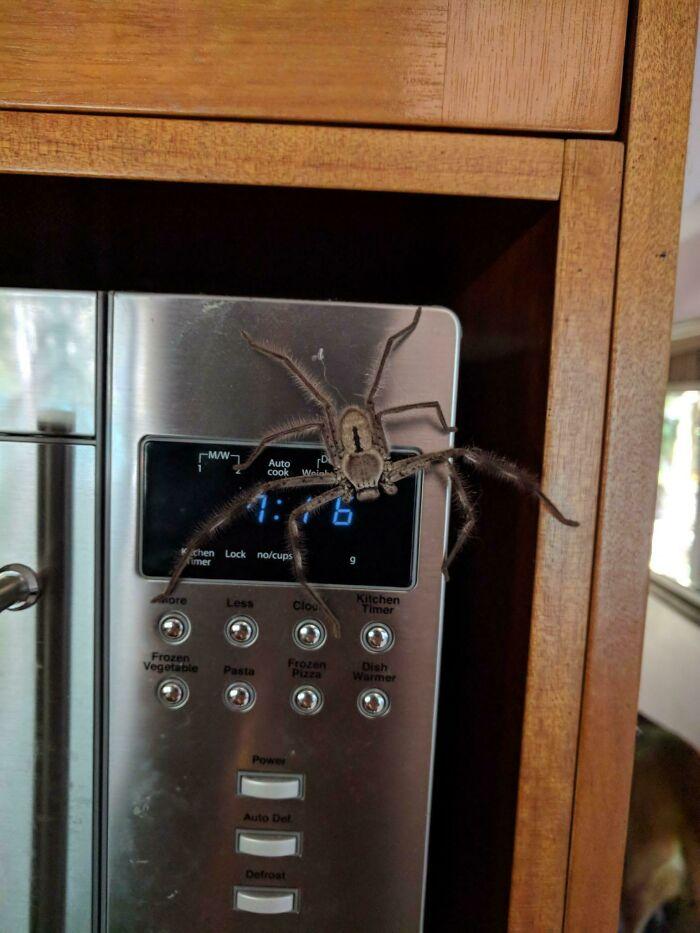 une araignée sur un four
