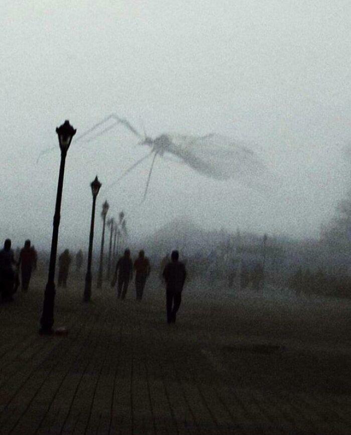un moustique passe devant la caméra