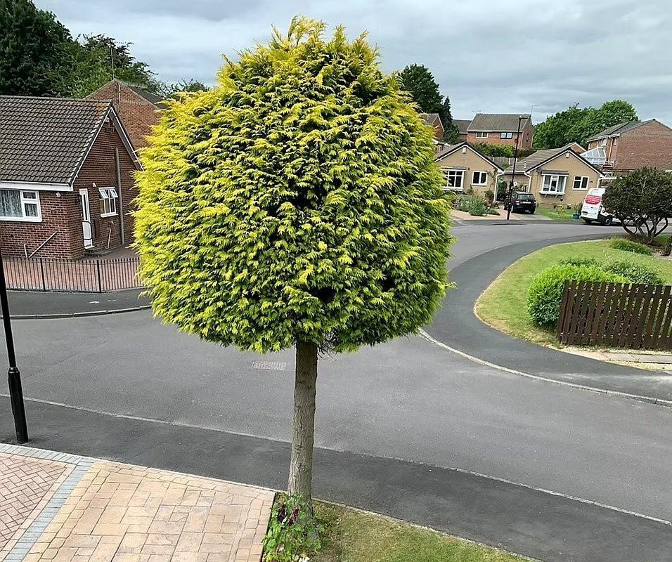 arbre de 25 ans