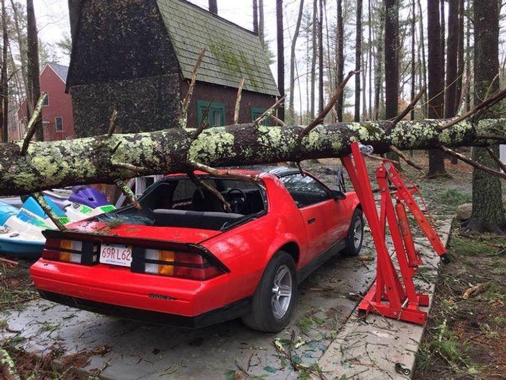 un arbre sur une voiture