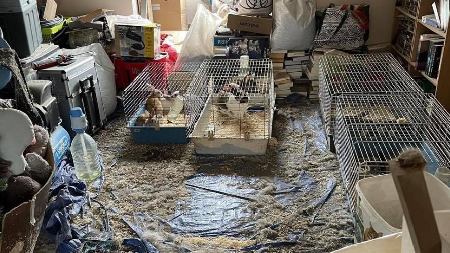 animaux sauvés par des associations de défense des animaux