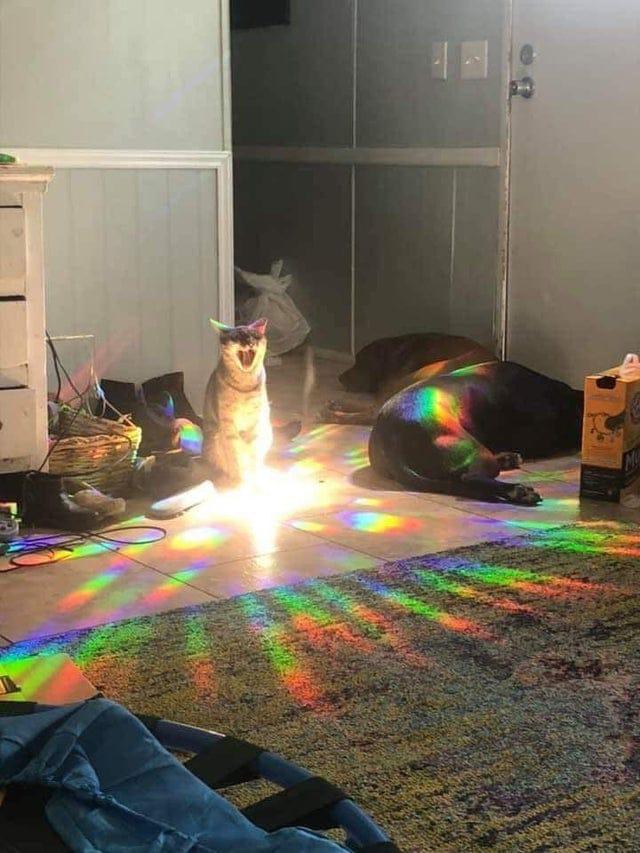 un chat ébloui par la lumière