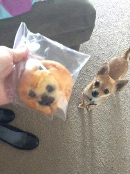 Un muffin qui ressemble à un chien