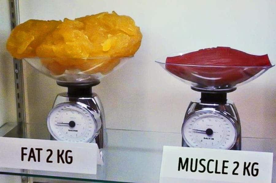la différence entre 2 kg de muscle et de graisse