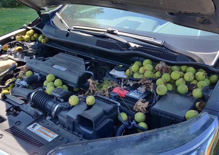 un moteur plein de fruits