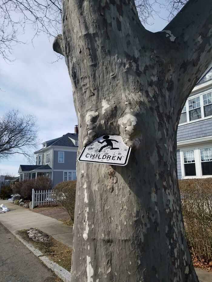 un panneau absorbé par un arbre