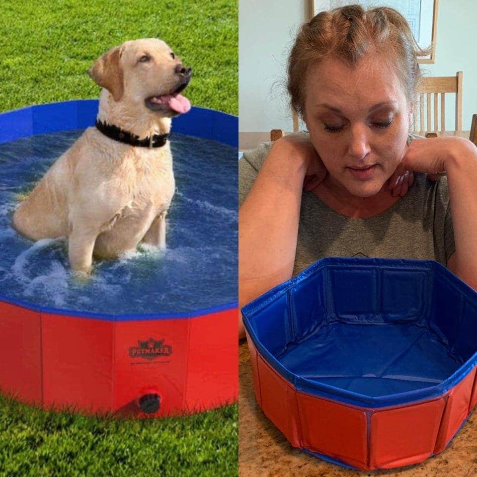 un piscine pour chien